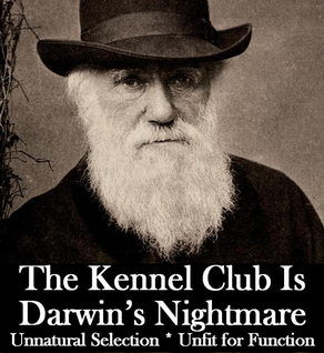 The Kennel Club is Darwin's Nightmare